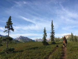 horse, alaskan horseback adventures, wilderness, alaska, wilderness, alaska range