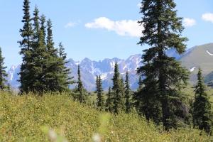 paradise, wild women, wilderness women, get outside, alaskan, black spruce, alaska range