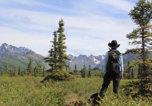 hike, alaska, wilderness, cowboy, bush, alaskan, adventure, hike