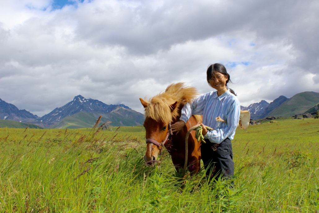 icelandic horse, alaska, wilderness, alaskan horse, alpine, alaska range